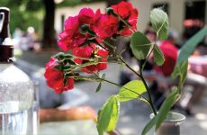 Tavasz a Krúdy-negyedben